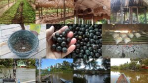 Figura 1- Diversidade Socioagroambiental do território do Baixo Tocantins – Copia